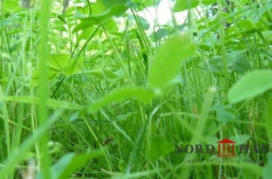 Gamta1